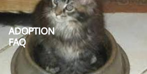 East Coast Maine Coon Rescue
